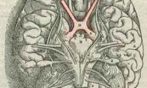 Хиазма или перекрест зрительных нервов: повреждения, болезни и лечение