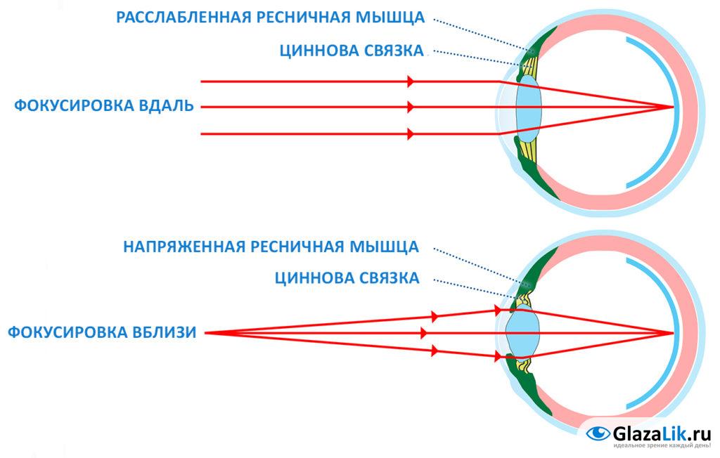 как происходит аккомодация глаза на схеме