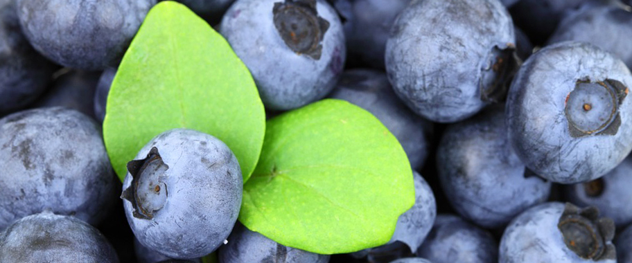 фото ягод черники для зрения
