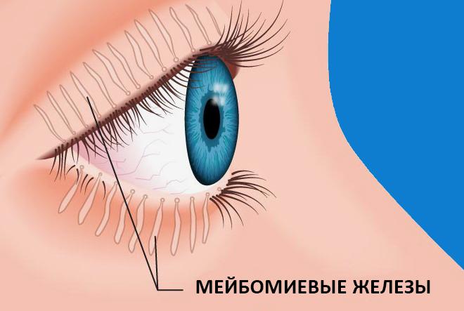 что такое мейбомиевые железы
