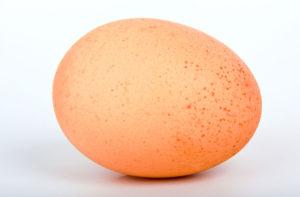 фото куриного яйца