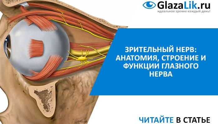 строение и функции зрительных нервов