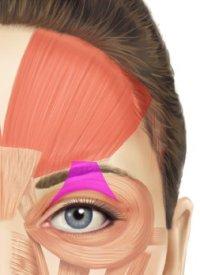 схема мышц глаз