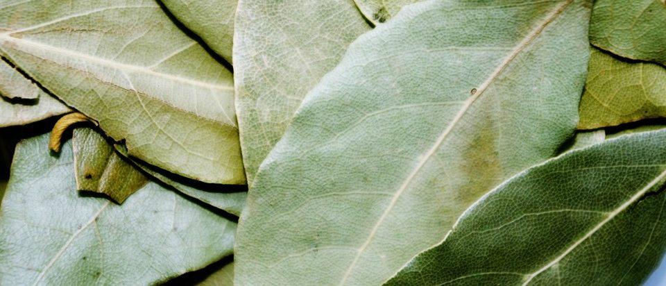 фото лаврового листа